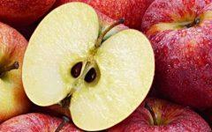 لماذا يضر تناول بذور التفاح بالصحة ؟ …إليكم الجواب